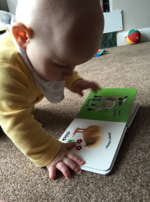 TM reading the sheep and duck page of the farm book