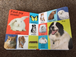 'Find my mum!' page in the first 100 animals book with cat, tiger, butterfly, owl, dog and rabbit pictured as well as all their baby counterparts (e.g. caterpillar, puppy etc)