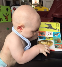 TM (almost bald 8 month old baby wearing just a nappy and bib) stood at a stool looking at the page of the animals book on the wild animals page with giraffe and lion mainly visible