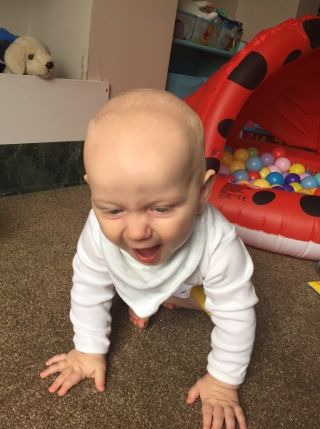 Almost bald, 8 month old baby wearing a long white sleeve vest top and bib crawling towards the camera laughing with his face looking downwards. there is a small red ball pool in the background.